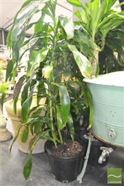 Sale 8272 - Lot 1035 - Collection of Indoor Plants