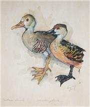 Sale 9067A - Lot 5052 - Stuart Gill - Northern Duck & Whistling Duck 32 x 27.5 cm (frame: 52 x 44 x 2 cm)