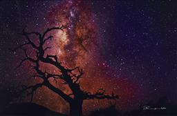 Sale 9189A - Lot 5053 - PETER LIK (1959 - ) 'Tree of the Universe' C Type photograph, ed. 853 /950 63.5 x 97 cm (frame: 109 x 143 x 5 cm) signed lower right