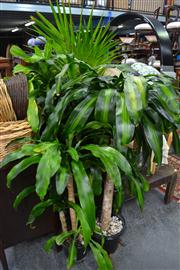 Sale 8147 - Lot 1091 - Collection of Plants