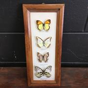 Sale 8758 - Lot 220B - Butterfly Collection, framed - some losses