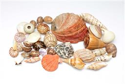Sale 9098 - Lot 45 - A collection of sea shells inc conch, gastropods and others