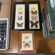 Sale 8758 - Lot 10A - Butterfly Collections, framed - some losses (3)