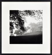 Sale 8296A - Lot 61 - Max Dupain (1911 - 1992) - Misty Morning, 1938 37 x 36cm