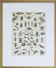 Sale 8586A - Lot 23 - An antique style print of various insects, 50 x 30cm