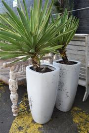 Sale 8550 - Lot 1369 - Set of Four White Matching Ceramic Planters with Yuccas