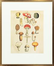 Sale 9040H - Lot 3 - An antique style horticultural print depicting various species of mushrooms, framed size 76 x 62cm