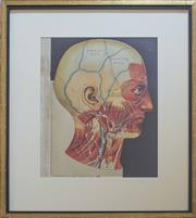 Sale 8511 - Lot 1094 - An Antique Style Scientific Print Depicting the Anatomy of the Head, after L. W. Jaggy & James J. West, 1885, 50 x 30cm