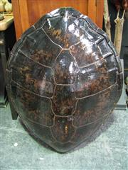 Sale 8331A - Lot 587 - Large Antique Sea Turtle Shell with applied finish