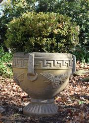 Sale 8972H - Lot 63 - An Old composition stone urn with mature Buxus (chip to base), height 65cm