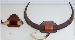 Sale 9103H - Lot 57 - Two mounted bovine horns and a single horn, largest width 88cm