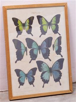 Sale 9150H - Lot 157 - A framed print of Papilio, frame size 63cm x 45cm