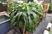 Sale 8251 - Lot 1099 - Collection of Plants