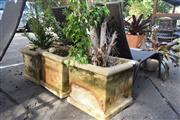 Sale 8550 - Lot 1335 - Three Sandstone Planters Containing Ficus Tree and Two Buxus Trees