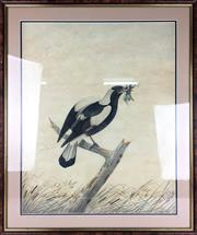 Sale 8589R - Lot 60 - Neville Cayley - Watercolour (58 x 47cm) (Minor Tearing to Sides with some Foxing)