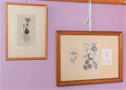 Sale 9120H - Lot 116 - Two framed botanical prints, larger frame size 55cm x 39.5cm, smaller signed S T Edwards fecit