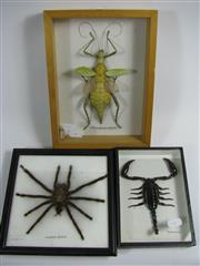 Sale 8331A - Lot 560 - Spider, Scorpion & Phasmid, framed