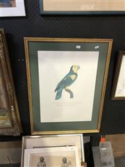 Sale 8903 - Lot 2071 - Framed Print Le Perroquet a Epaulettes jaune, male Pl98 (The Yellow-Epauletted Parrot, male)198/200, embossed lower right