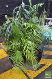 Sale 8338 - Lot 1400 - Large Collection of Indoor Plants