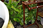 Sale 8046 - Lot 1049 - Collection of Small Plants