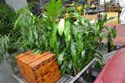 Sale 8046 - Lot 1058 - Collection of Plants