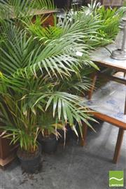 Sale 8338 - Lot 1478 - Large Collection Of Indoor Plants