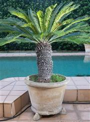 Sale 8562A - Lot 248 - A pair of potted cycad palms each in composite circular pots on three feet, D of pot 70cm