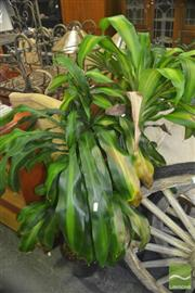 Sale 8331 - Lot 1030 - Collection of Indoor Plants