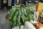 Sale 8046 - Lot 1091 - Collection of Plants