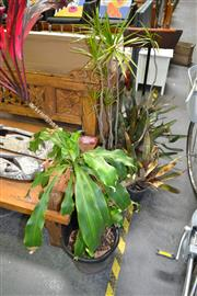 Sale 8138 - Lot 942 - Collection of Potted Plants