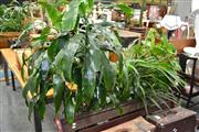 Sale 8046 - Lot 1097 - Collection of Plants