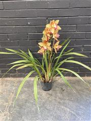 Sale 9051 - Lot 1038 - Potted Cymbidium Strawberry Cream Orchid (h:94cm)