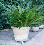 Sale 8562A - Lot 254 - A pair of potted cycad palms each in composite circular pots on three feet, D of pot 70cm