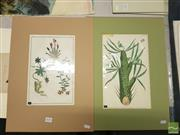 Sale 8552 - Lot 2078 - Quantity of (3) Hand-Coloured Botanical Engravings