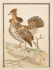 Sale 8565A - Lot 5028 - Attributed to Pierre Sonnerat (1745 - 1814) - Bird Study 24 x 17.5cm