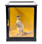 Sale 8586A - Lot 69 - A miniature kangaroo and joey taxidermy study in glass case, H of case 33cm