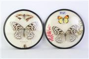 Sale 8818N - Lot 696 - Pair Of Circular Framed Butterfly Displays Dia 20cm