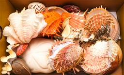 Sale 9110 - Lot 54 - A collection of shells inc clam, and sand dollar