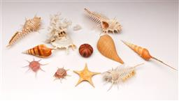 Sale 9110 - Lot 60 - A Collection of shells inc starfish, murex and urchins