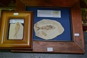 Sale 8031 - Lot 1025 - 2 Fine Framed Fossil Fish (USA)