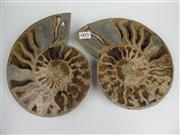 Sale 8431A - Lot 603 - Cleoniceras Ammonite (Jurassic Period), Madagascar