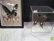 Sale 8447 - Lot 1003 - Collection of Butterflies
