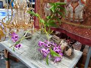 Sale 8843 - Lot 1043 - Organic Planted Oldmans Beard with Flowering Orchid