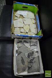 Sale 8499 - Lot 1643 - 2 Boxes Fossils, 2 Locations & Text