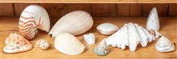 Sale 9120H - Lot 169 - A quantity of shells including Nautilus, clam, and others