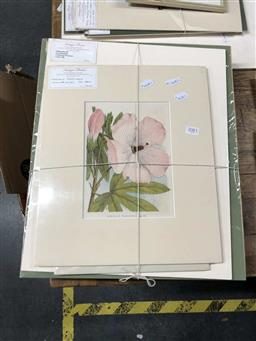 Sale 9172 - Lot 2083 - 15 assorted antique chromolithographs and hand coloured copper engravings of botanical studies, 41 x 44 cm (unframed) -
