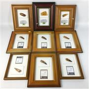 Sale 8758 - Lot 385 - Assortment of Amber with Insect Inclusions (4) & Framed Dinosaur Teeth (6)