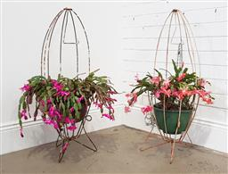 Sale 9174 - Lot 1423 - Pair of Cacti with bird-cage stand (h96cm)