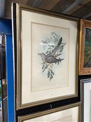Sale 8888 - Lot 2058 - John Gould,Oriental Cuckoo (Cuculus Optatus), Hand coloured lithograph, printed by Hullmandel and Walter, 74.5 x 56.5 cm