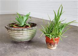 Sale 9255 - Lot 1398 - Collection of 2 potted plants together with a concrete planter (h:55cm)